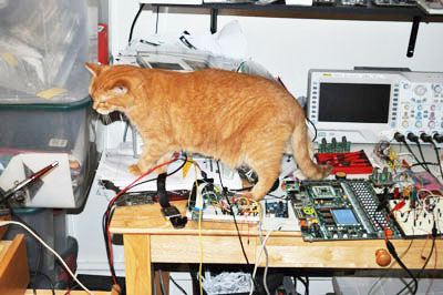 Ginger the Programmer Cat